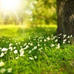 primavera-2020-covid19-nuno-cortez