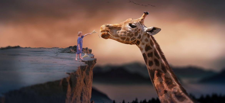 giraffe-1959110